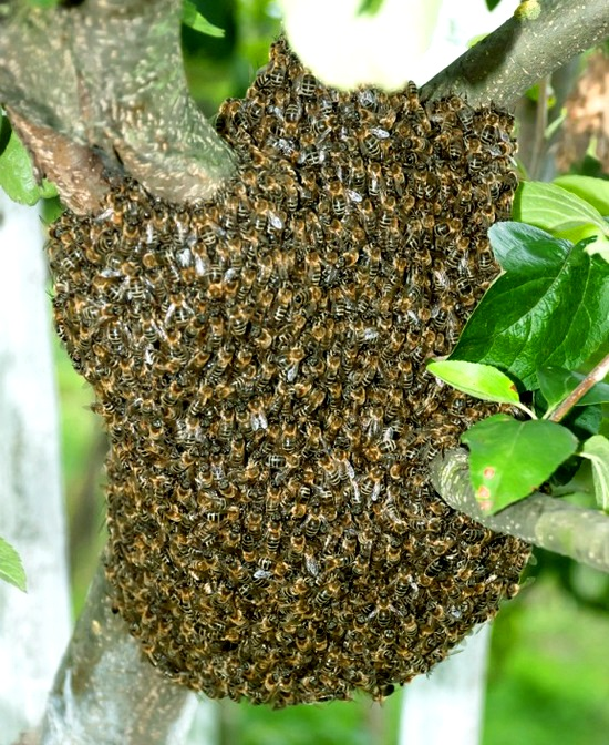 Bee removal experts for tailored bee and wasp infestation solutions bee removal solutioingenieria Images
